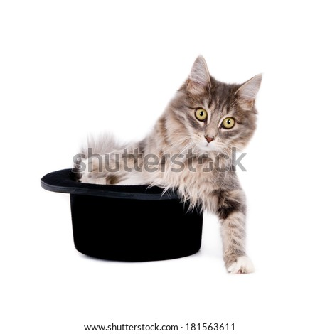 Gray kitten stepping out of a gentleman's hat. Isolated on white