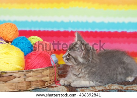 gray long haired tabby kitten laying on colorful carpet floor, bright striped background, balls of yarn in a basket. - stock photo