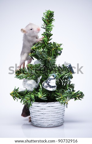 Gray mice playing near a toy tree