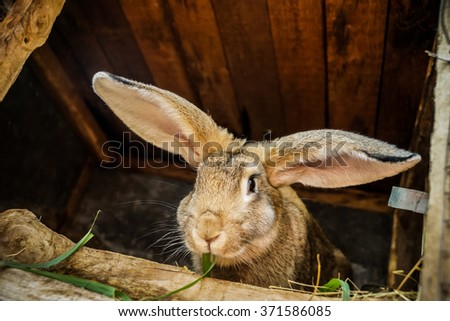 Gray or brown rabbit eat green grass in summer day - stock photo