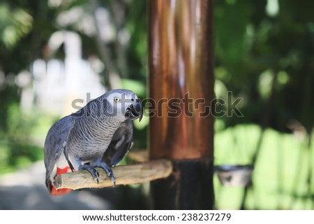Gray parrot African Grey sits on a tree branch in a zoo close-up - stock photo
