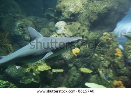 Largemouth bass fish underwater location stock photo for What is the fastest swimming fish