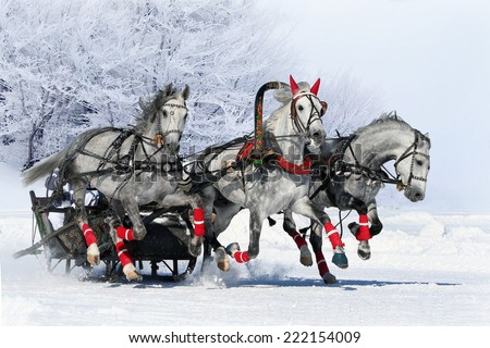 Gray russian troika. white horses - stock photo