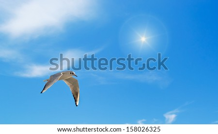 gray seagull flying under a bright sun - stock photo