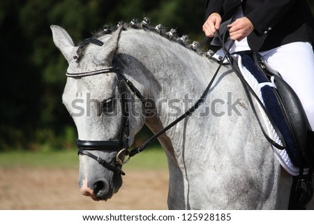 Gray sport horse portrait during dressage competition - stock photo