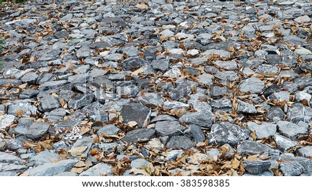 gray stone with dry leaves on the ground.