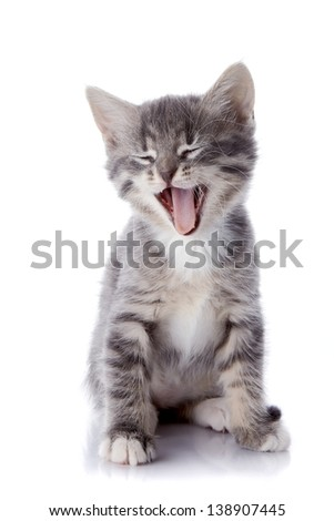 Gray striped kitten. Striped kitten with blue eyes. Kitten on a white background. Small predator. - stock photo
