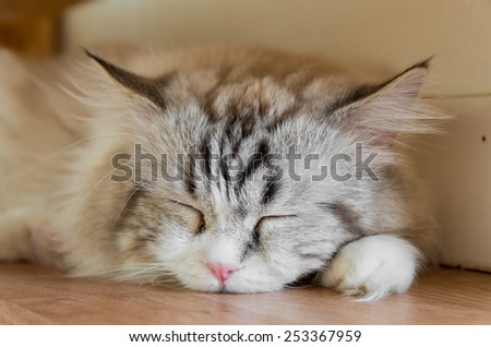 Gray Tabby Cat is sleeping on the floor - stock photo