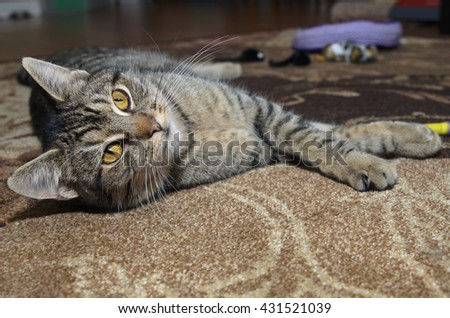 Gray tabby cat laying on carpet - stock photo