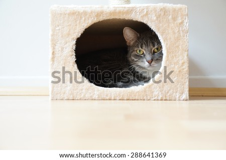 gray tabby cat resting in box shaped hideaway cat bed - stock photo