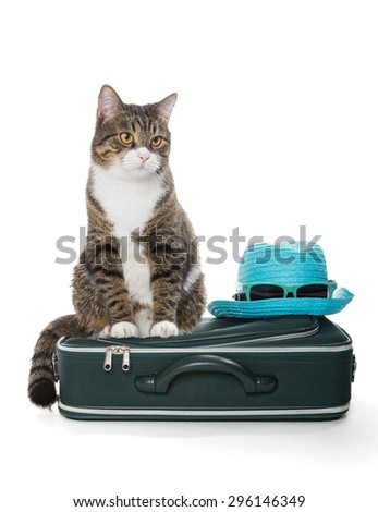 Gray tabby cat sitting on a green suitcase, isolated on white - stock photo