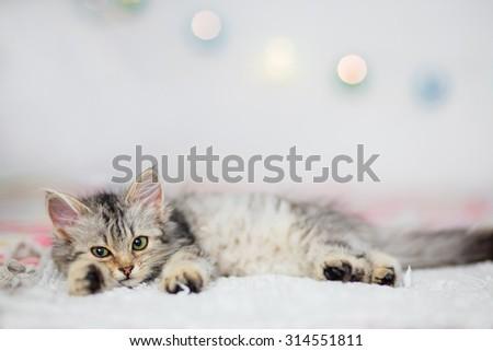 Gray tabby kitten - stock photo