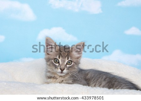 Gray tabby kitten awake,laying on sheep skin blanket with blue background with clouds. copy space above - stock photo