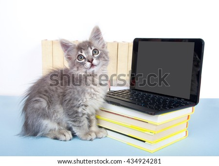 Gray tabby kitten looking at a blank screen on a miniature laptop type computer, screen blank for your message. Piles of books next to and under computer. Back to school.