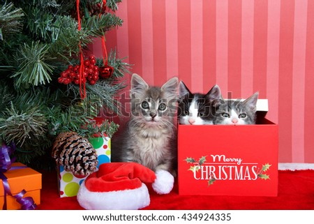 Gray tabby kitten next to a christmas tree with presents on red fuzzy floor, striped red and off white background, two kittens peaking out of present box next to him. Friends for Christmas - stock photo