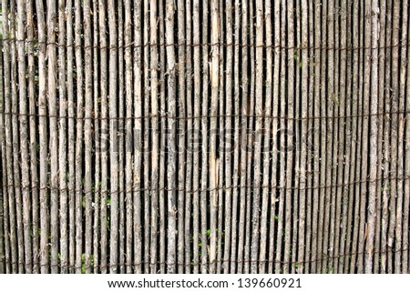 Gray wattle, the old fence as background, close up - stock photo