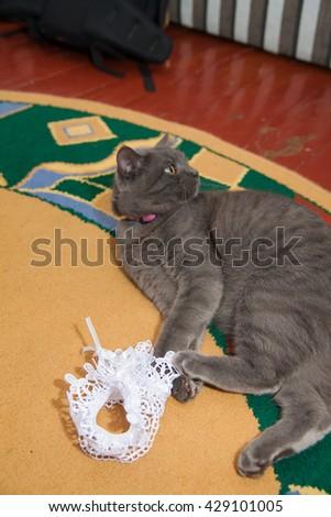 gray wedding garter cat playing on the floor - stock photo