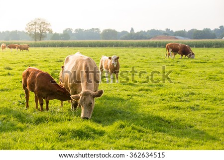 Grazing - stock photo