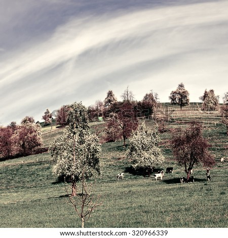 Grazing Cows and Flowering Tree Surrounded by Sloping Meadows in Switzerland, Vintage Style Toned Picture - stock photo