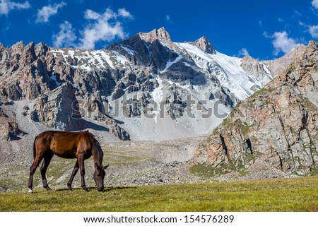 Grazing horse at sunny day in high snowy mountains, Tien Shan, Kyrgyzstan - stock photo