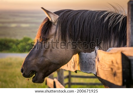Grazing Horse behind the Fence at Sunset - stock photo