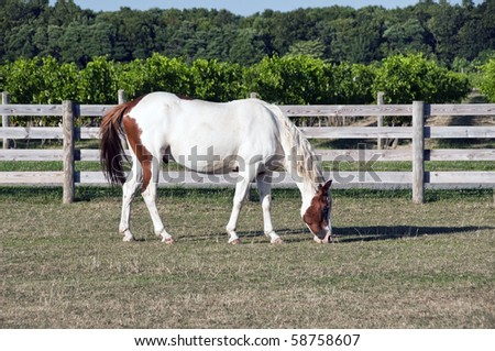 Grazing horse in corral - stock photo