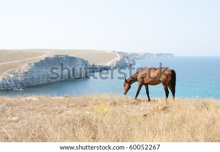 Grazing Horse. Wild life nature - stock photo