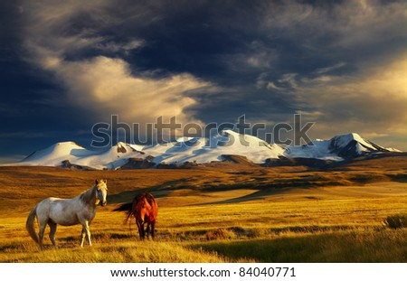 Grazing horses at sunset, plateau Ukok, the junction of Russian, Mongolian and Chinese boarders - stock photo