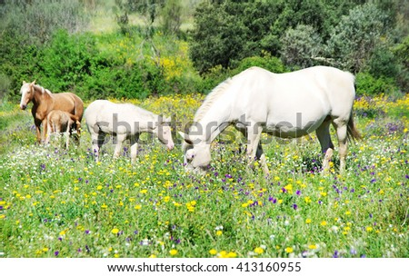 Grazing horses in field at Portugal - stock photo