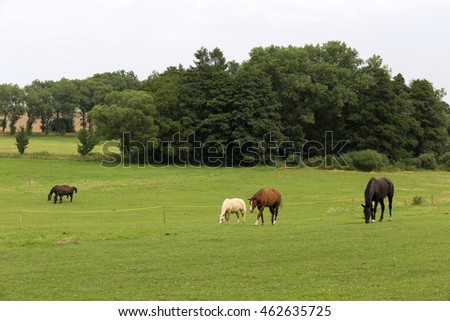 Grazing Horses in the summer Landscape
