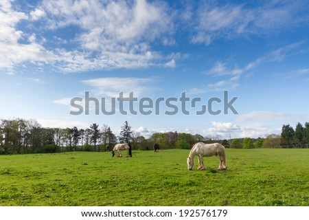 Grazing Horses on a Green Meadow with Blue Sky - stock photo