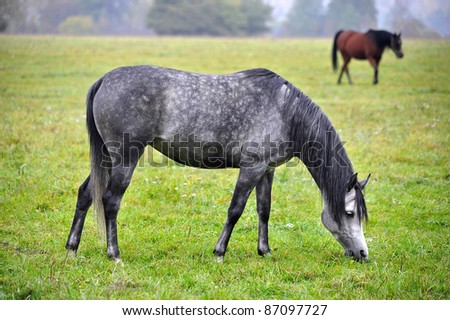 grazing horses on the meadow - stock photo