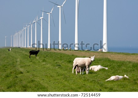 Grazing sheep along the Dutch coast with windmills - stock photo