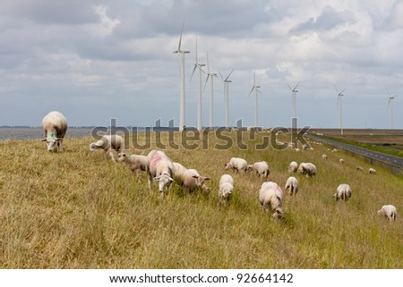 Grazing sheep at a dike with large wind turbines in the Netherlands - stock photo