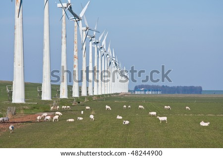 Grazing sheep in springtime beside a long row of windmills - stock photo