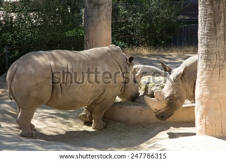 great African rhino - stock photo