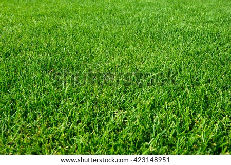 great background lawn grass haircut - stock photo