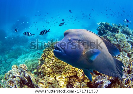 Great barrier reef fish - stock photo
