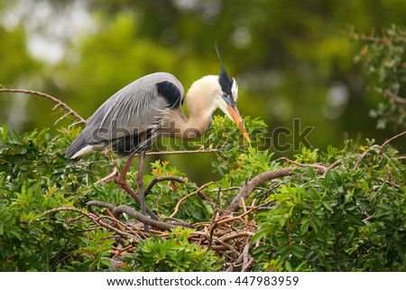 Great Blue Heron (Ardea herodias) standing on a nest. It is the largest North American heron. - stock photo