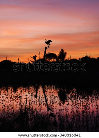 Great Blue Heron Lands on Dead Tree at the Beach in a Beautiful Sunset - stock photo