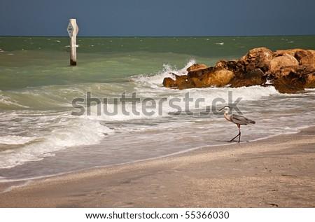 Great Blue Heron on Sanibel Beach, Florida - stock photo