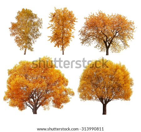 Great collection of autumn trees isolated on white background - stock photo