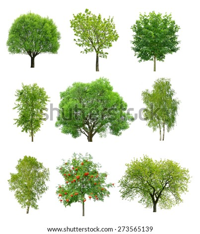 Great collection of deciduous trees isolated on white background - stock photo