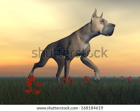 Great dane dog standing in the grass by cloudy weather