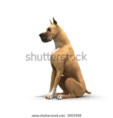 Breed Of Large Statuesque Dog