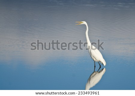 Great Egret Against a Pale Blue Background - stock photo