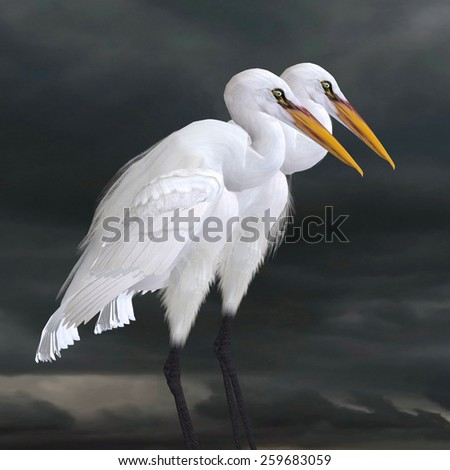 Great Egret - The Great Egret is a saltwater and freshwater wader hunting fish, frogs and small aquatic animals. - stock photo
