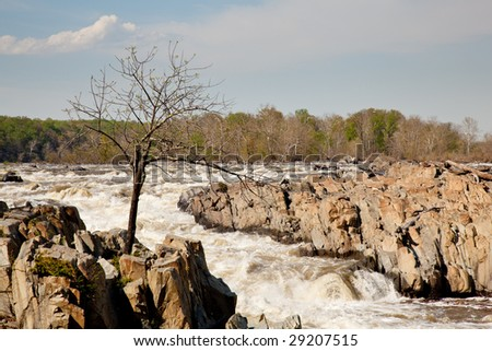 Great Falls on the Potomac near Washington with a small tree struggling to survive on the rocks - stock photo