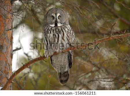 an analysis of grey owl a result of stereotypes 23-3-2015 an analysis of the free essay on analysis of the an analysis of grey owl a result of stereotypes infamous watergate an analysis of the watergate.