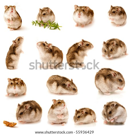 great hamster collection - stock photo